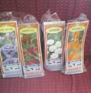 Rose-saplings-2
