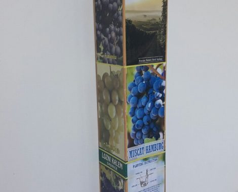 1-grapevine-packaging-1