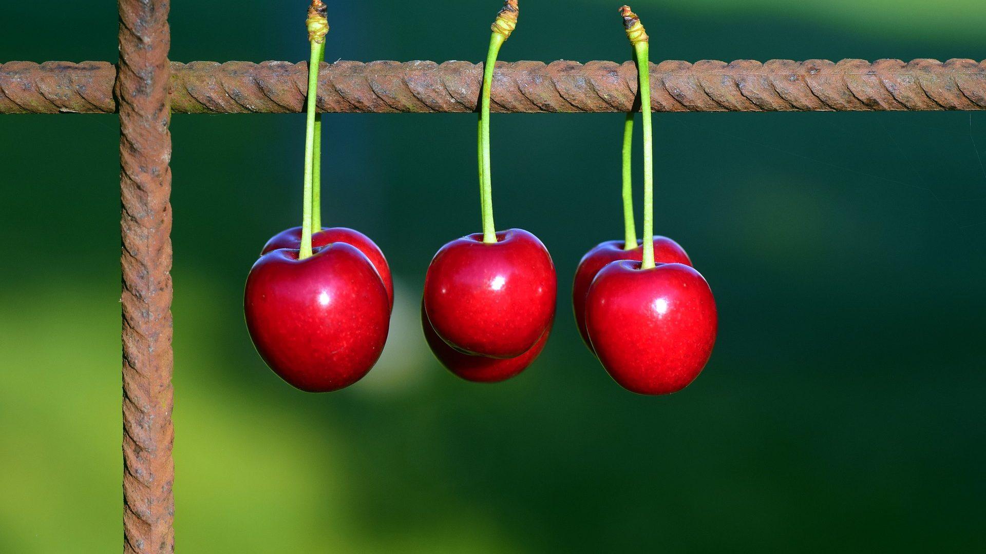 cherries-2426162_1920