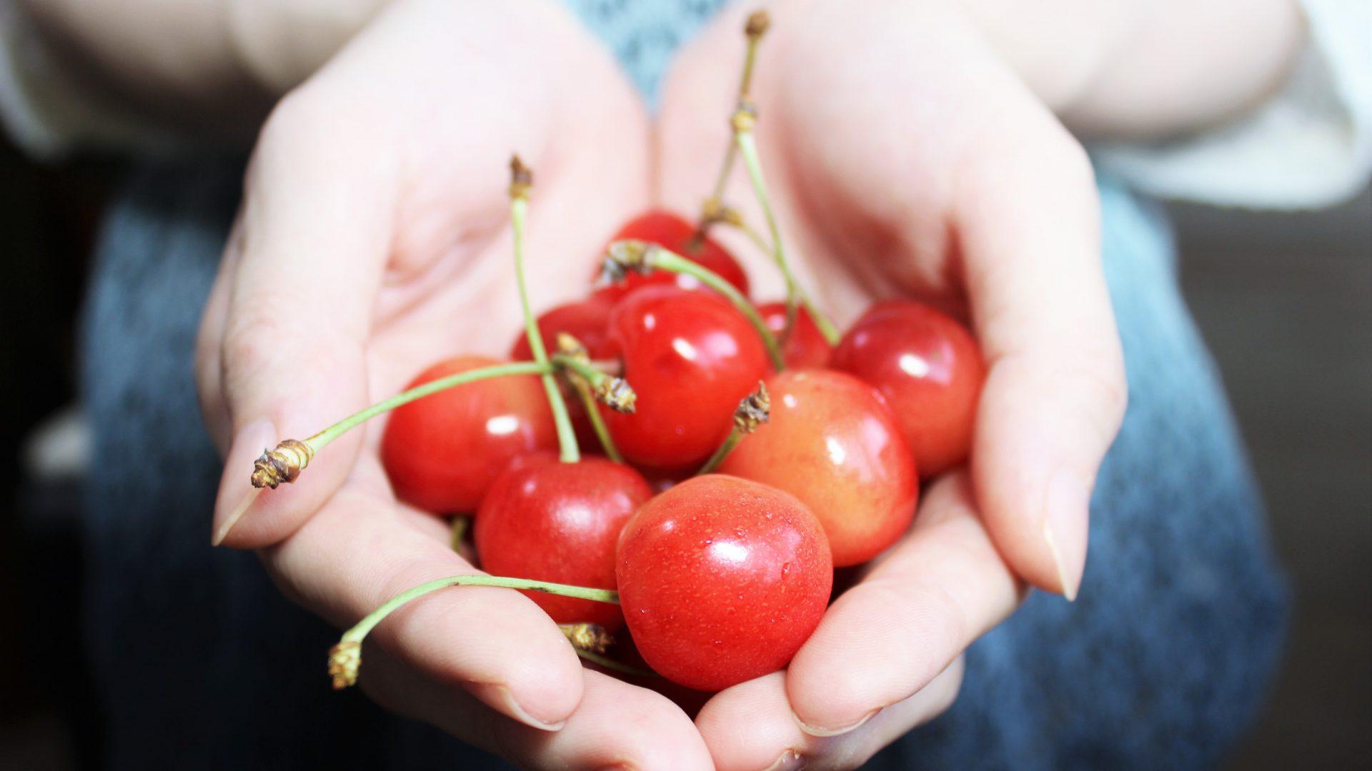 cherries hand-1532124