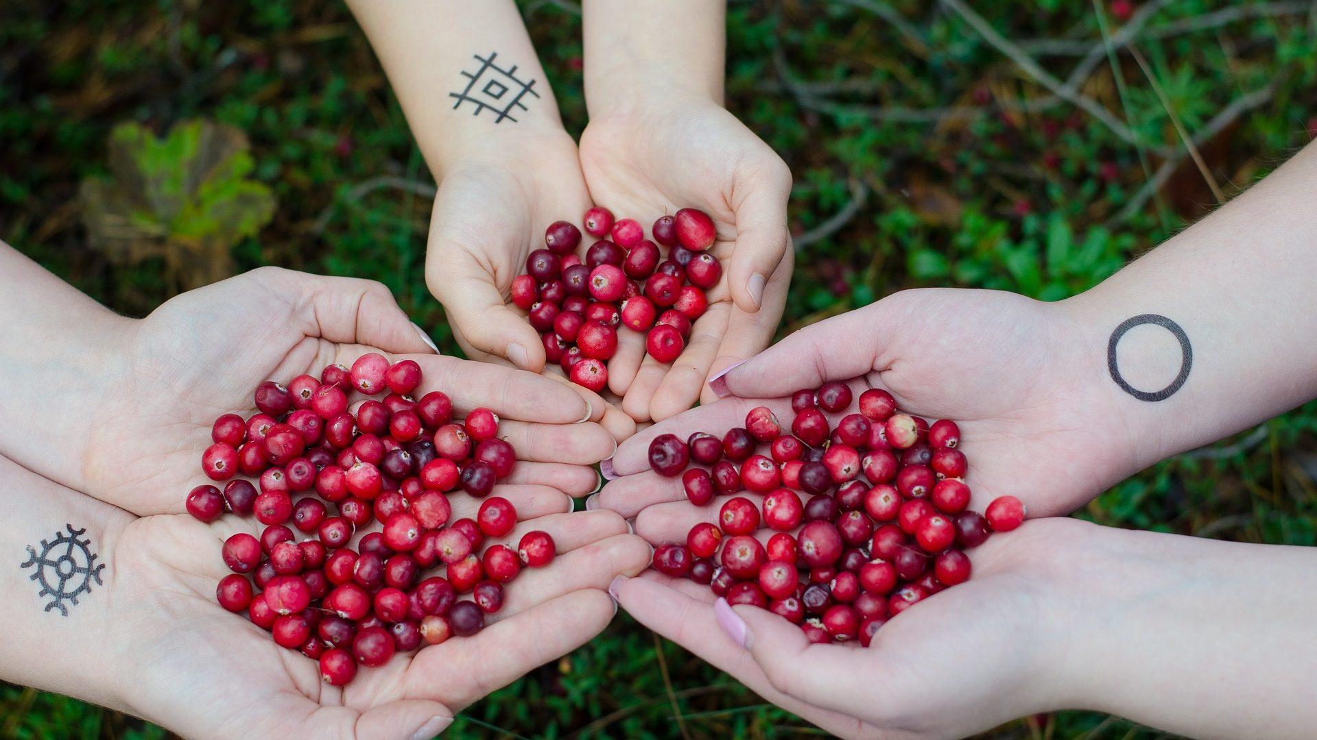 cranberries-2810138_1920