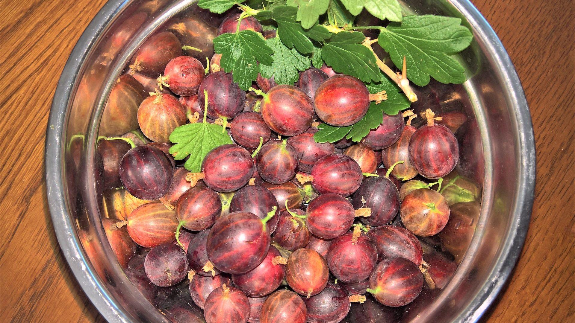 gooseberries-3535189_1920