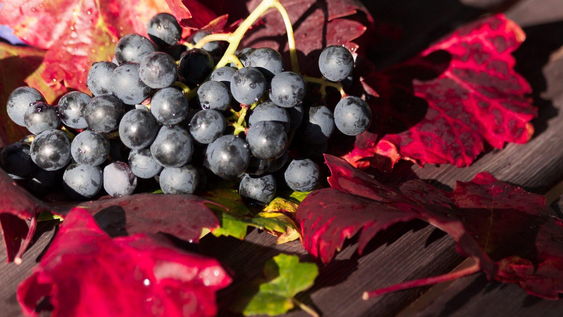grape-1729460