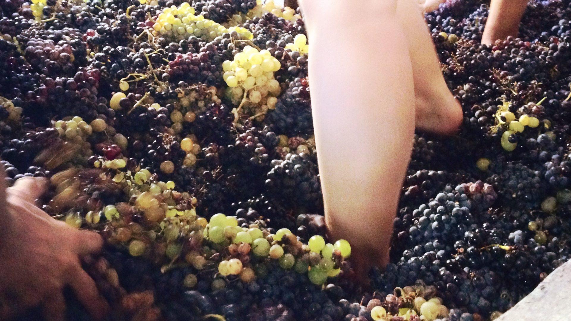 grapes-1799983
