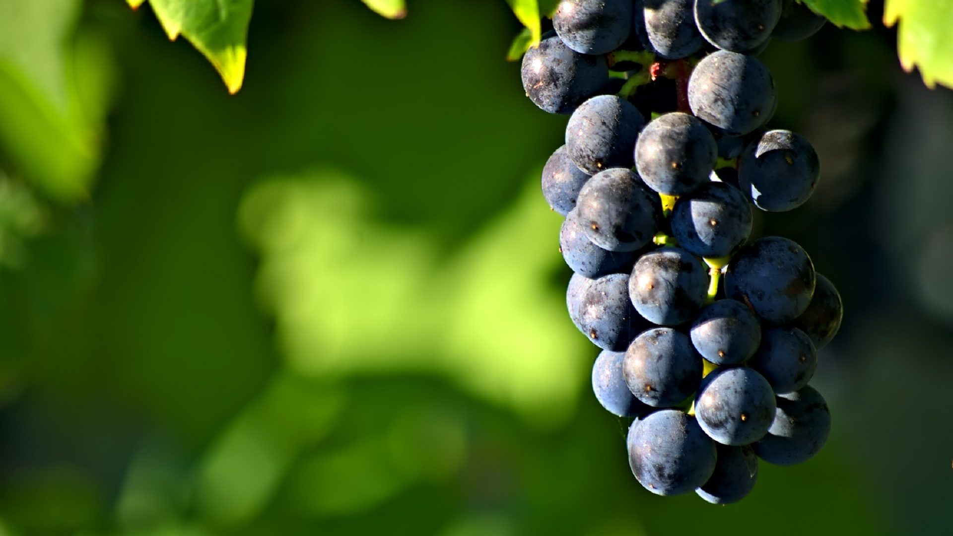 grapes-980902