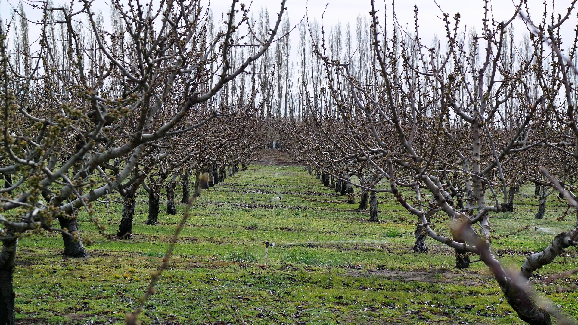 orchard-929417_1920