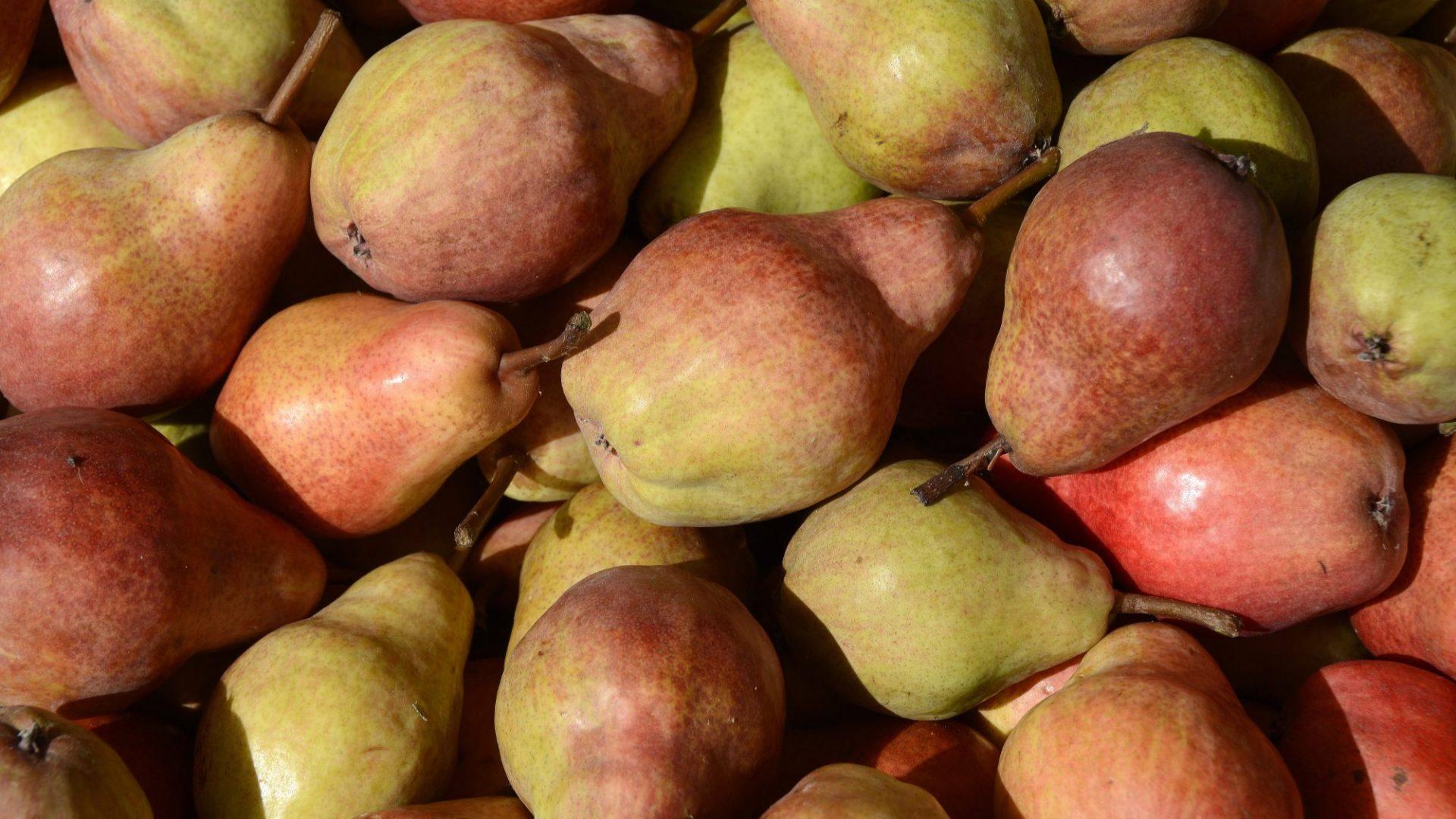 pears-3670679
