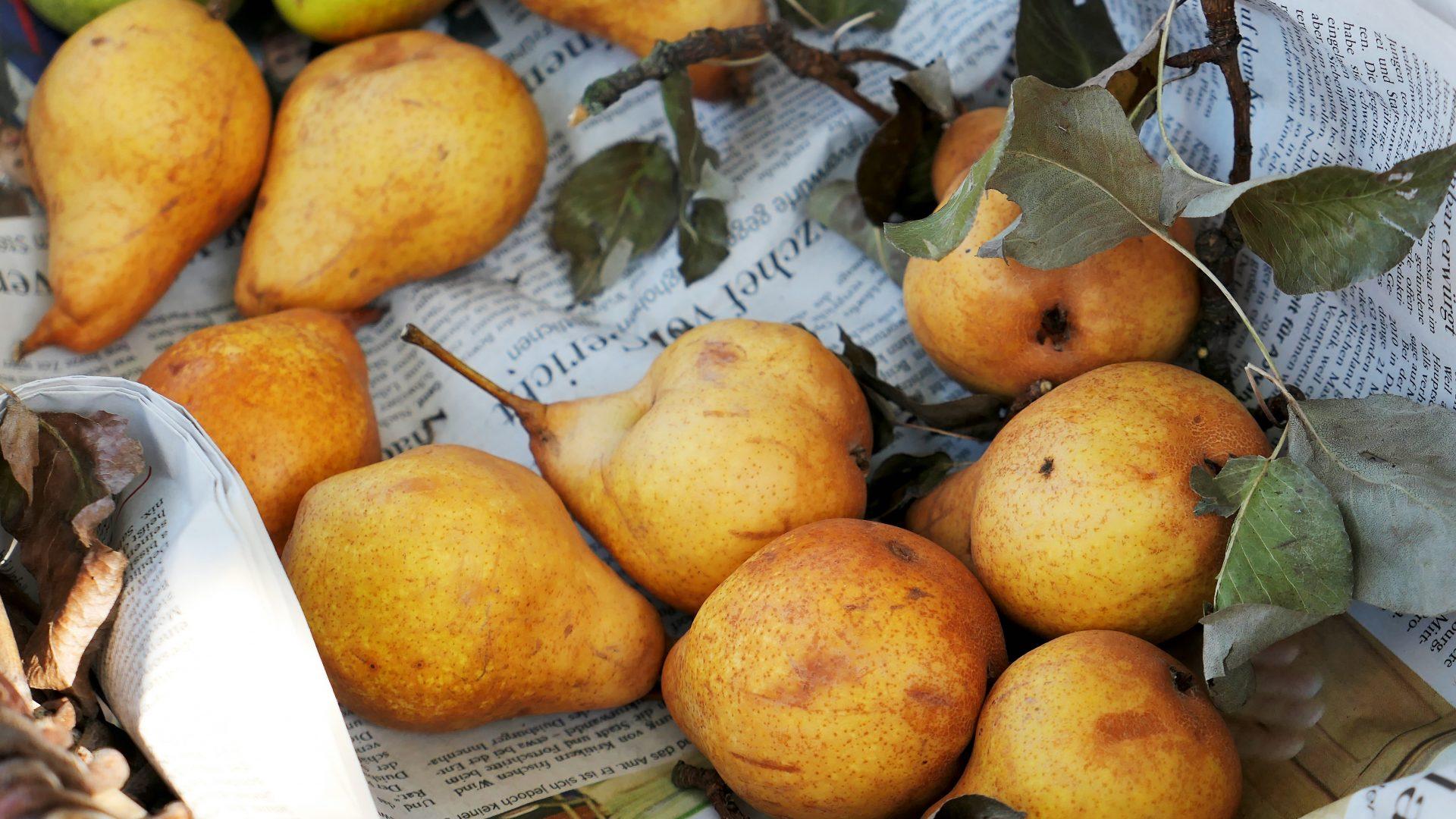 pears-3697536
