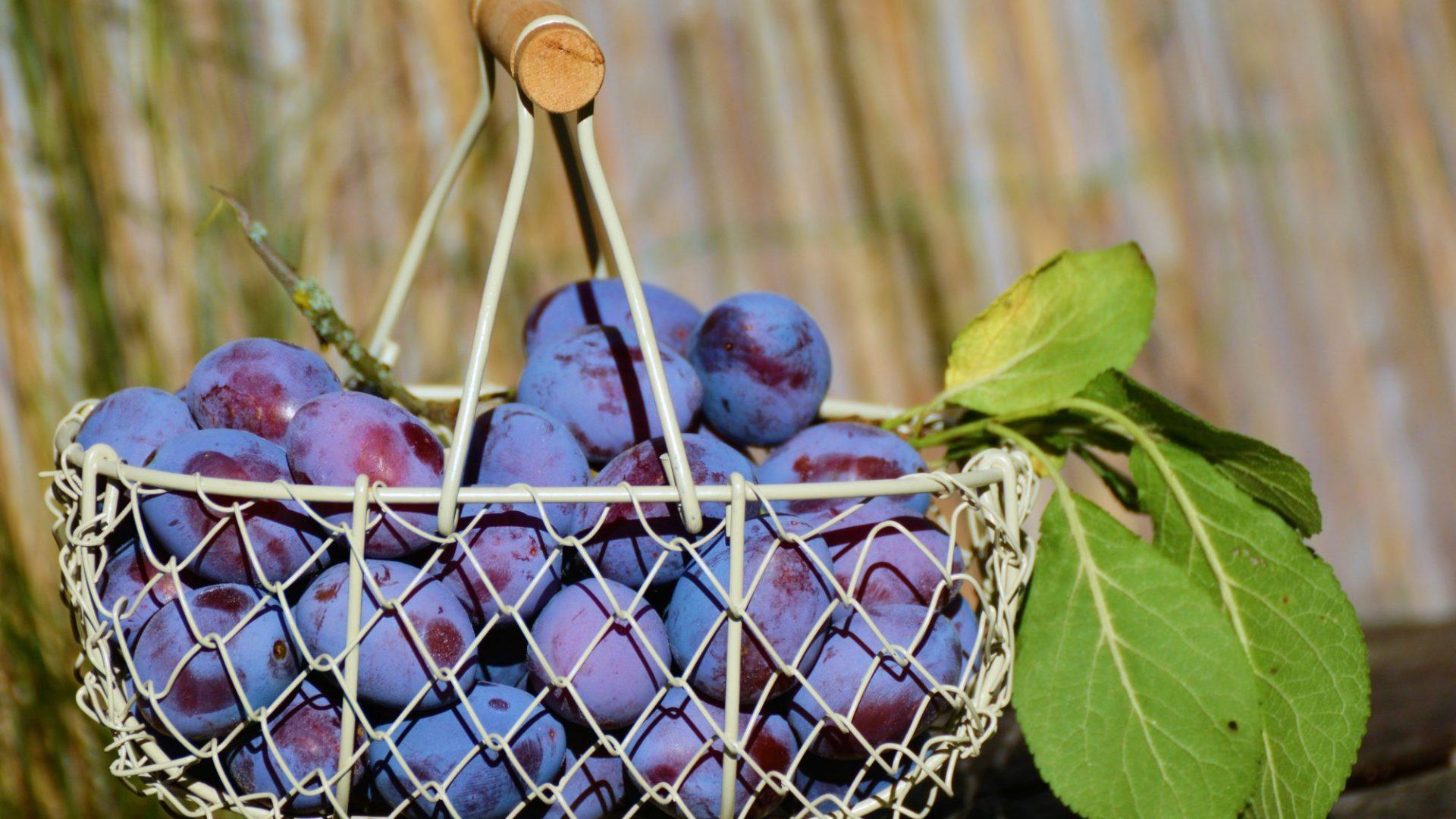 plums-1649602