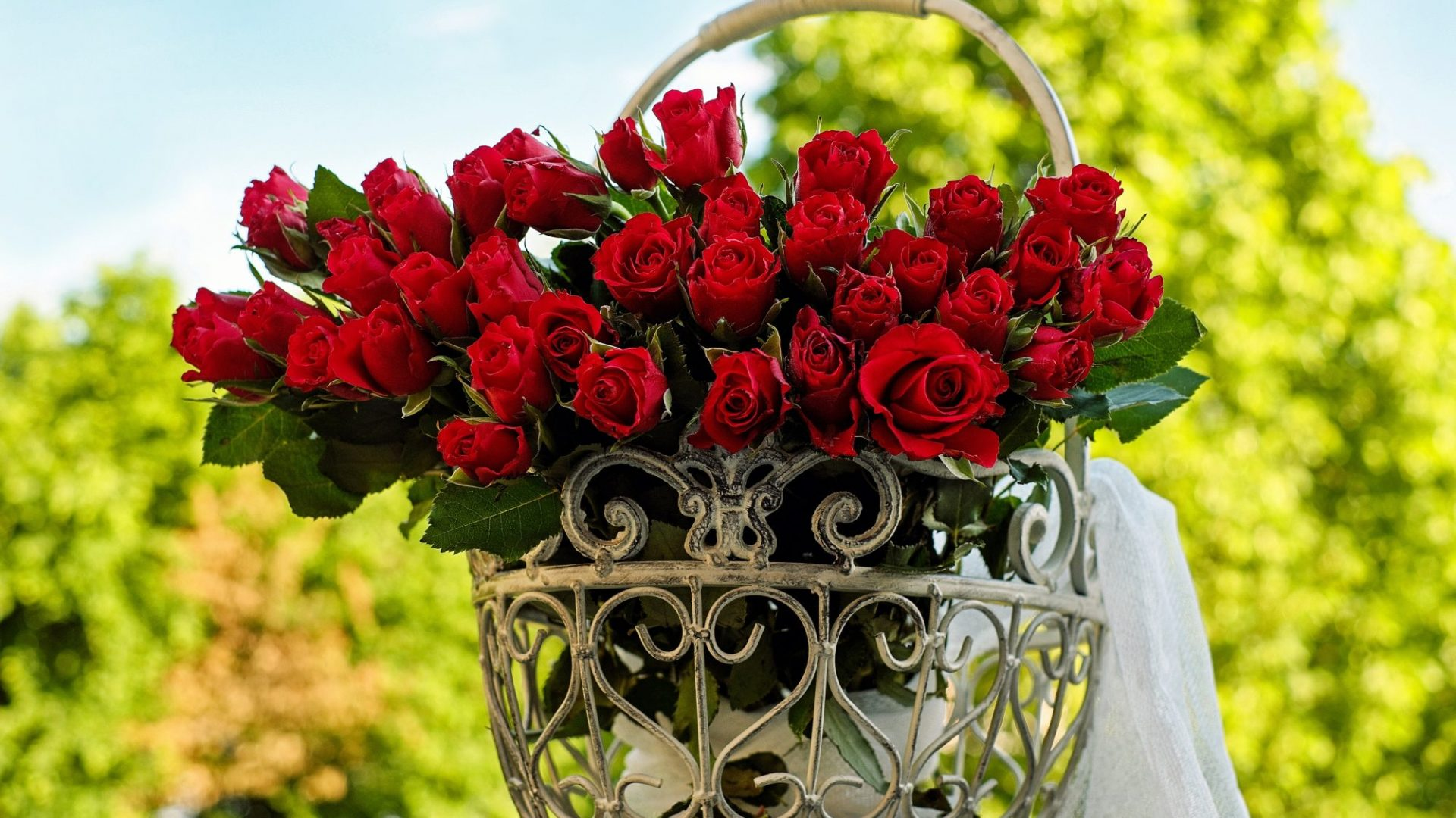 roses-1417263