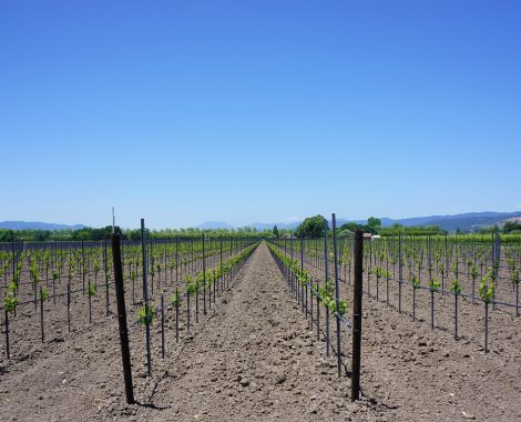 vineyard napa-valley-856043_1280