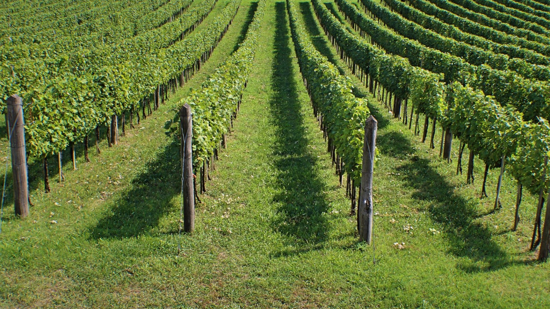 vineyards-2014906