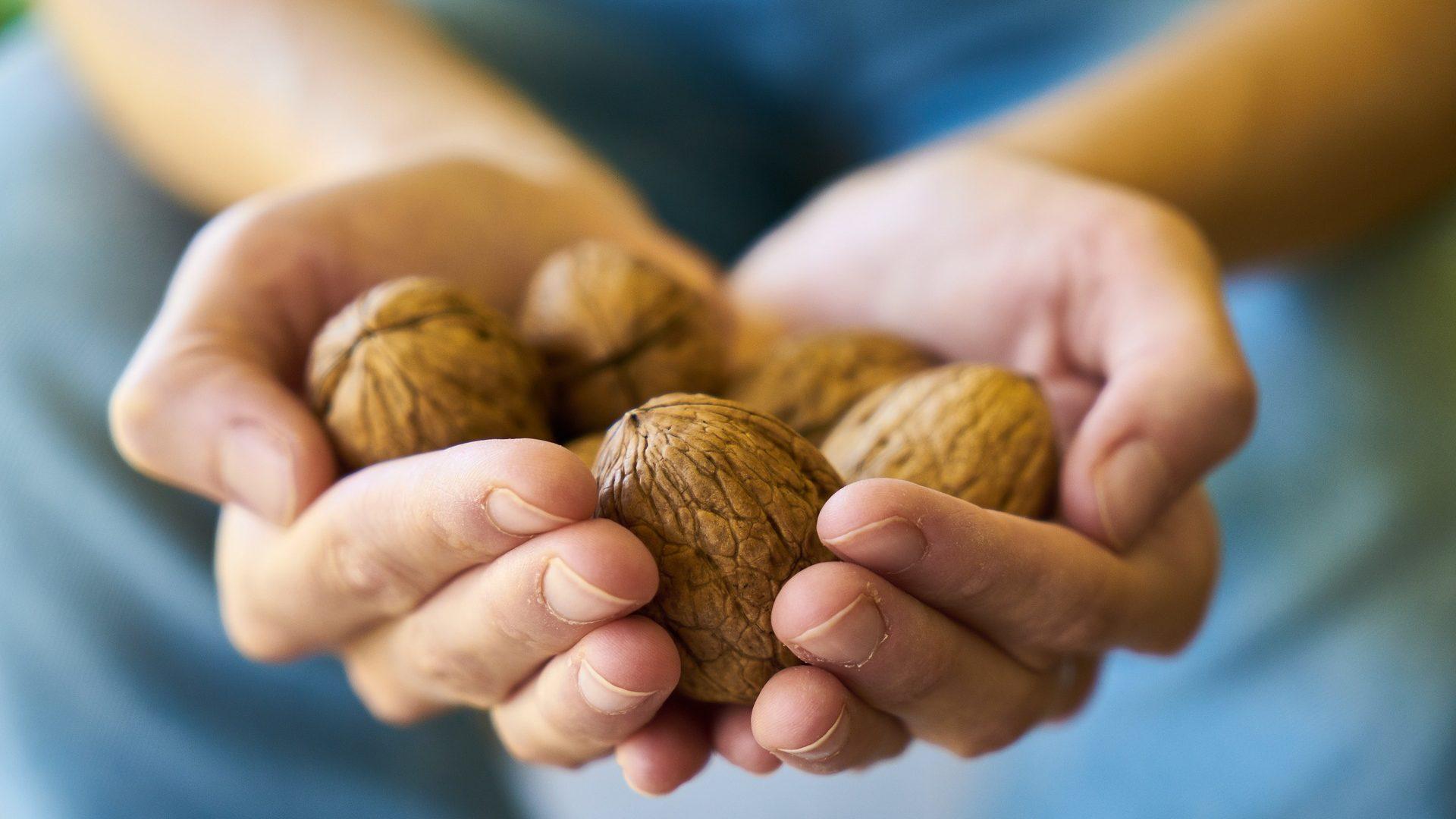 walnut-3658645_1920