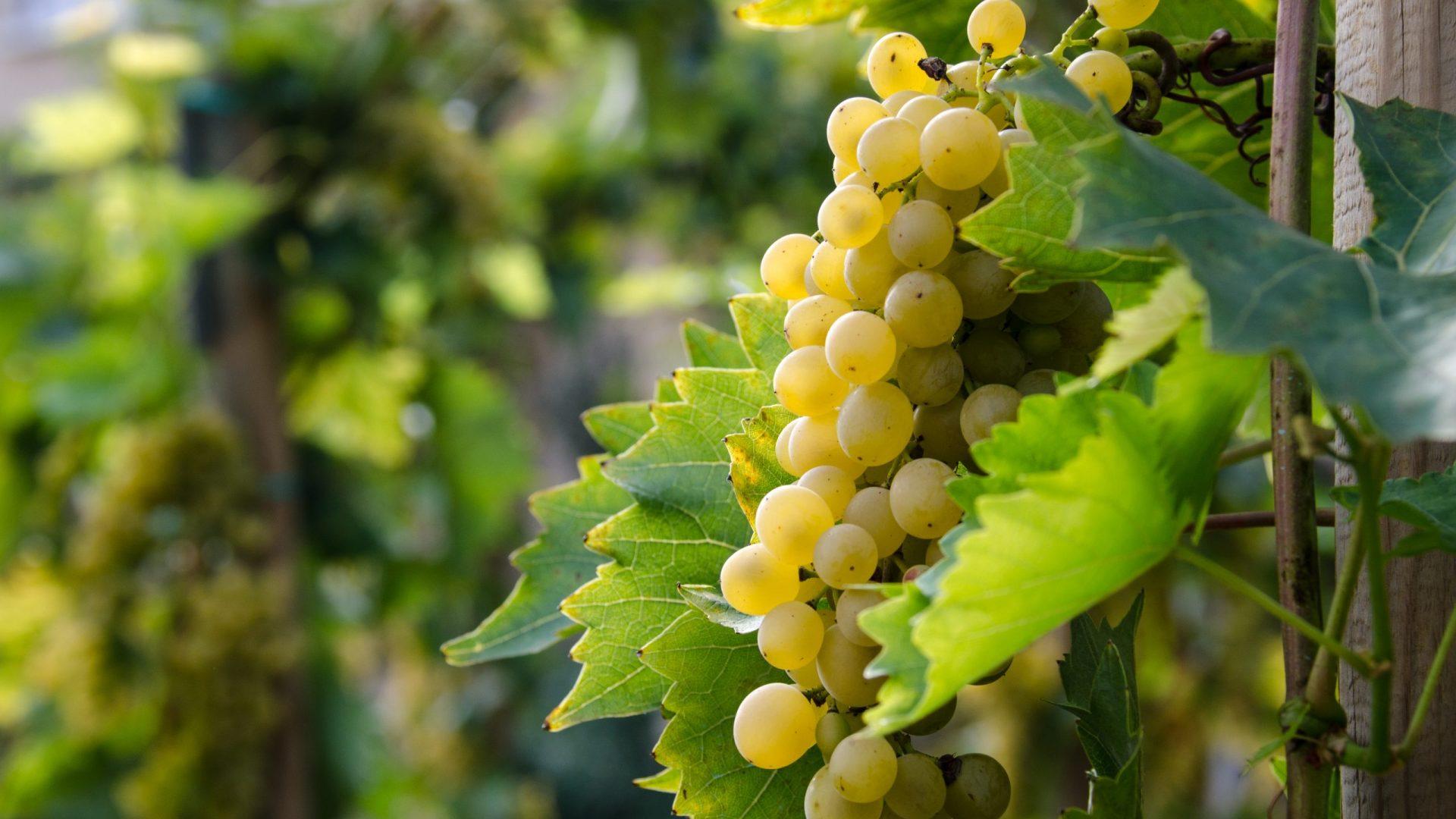 white-wine-4491188