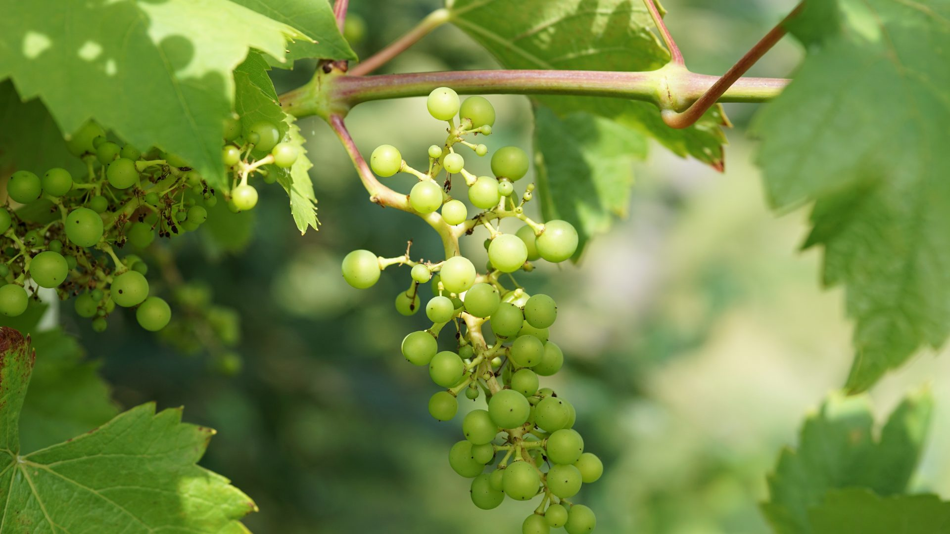wine-2595443