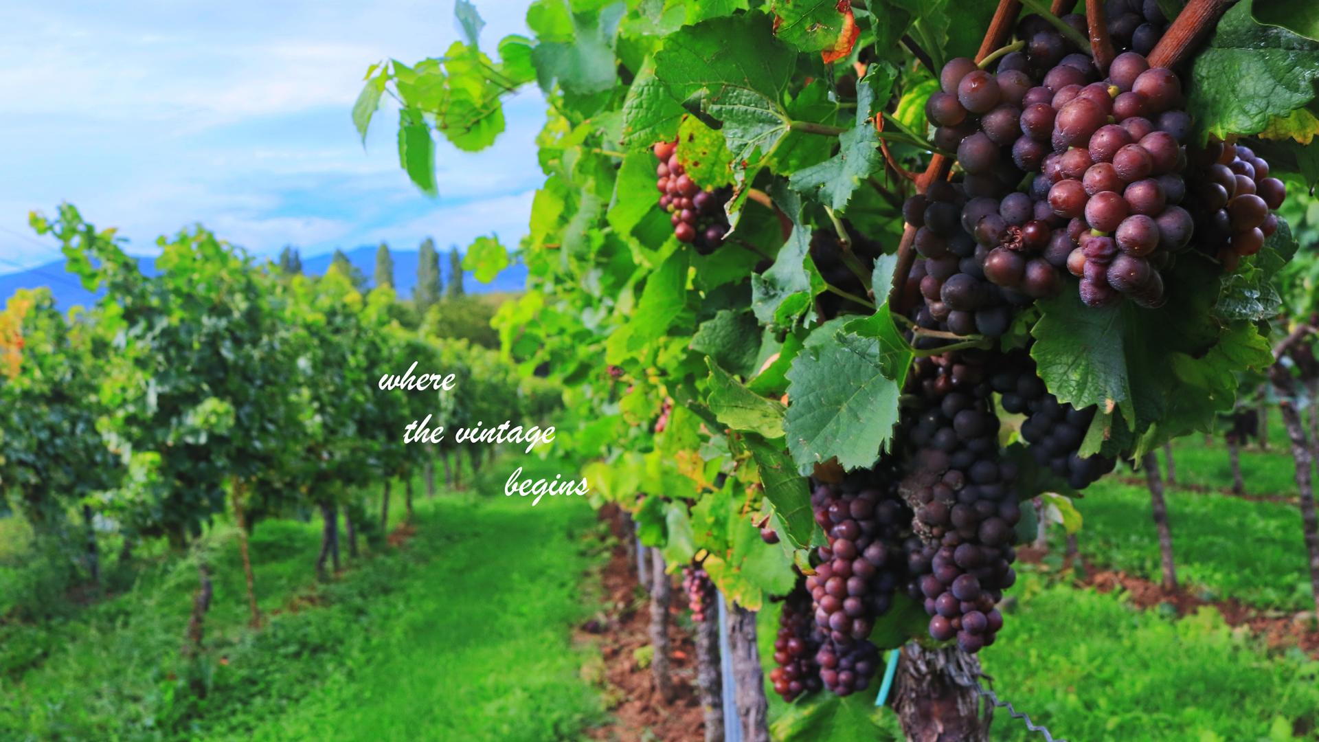 wine-2799719-2